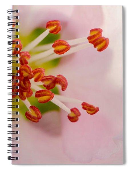 In A Pink Cloud Spiral Notebook