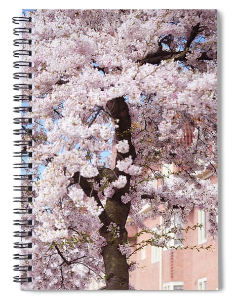 In Its Glory. Pink Spring In Amsterdam Spiral Notebook