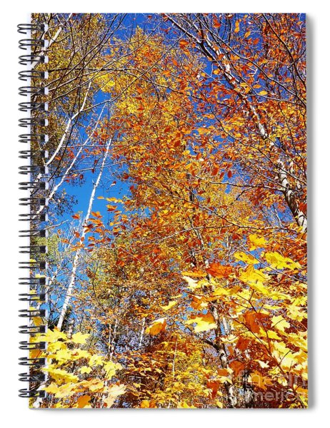 In The Forest At Fall Spiral Notebook