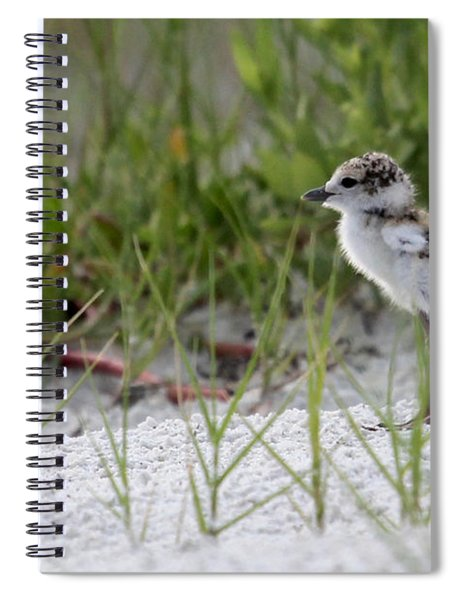 In The Grass - Wilson's Plover Chick Spiral Notebook