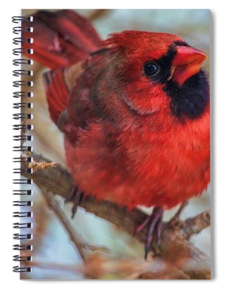 Inquisitive Cardinal Spiral Notebook