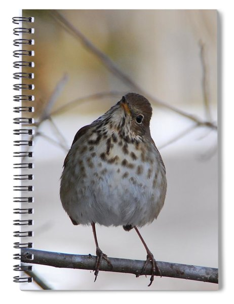 Inquisitive Hermit Thrush Spiral Notebook