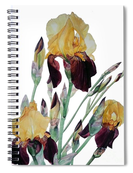 Watercolor Of Tall Bearded Iris In Yellow And Maroon I Call Iris Beethoven Spiral Notebook
