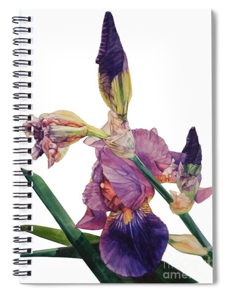 Watercolor Of A Tall Bearded Iris In A Color Rhapsody Spiral Notebook