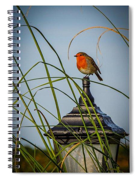 Irish Robin Perched On Garden Lamp Spiral Notebook