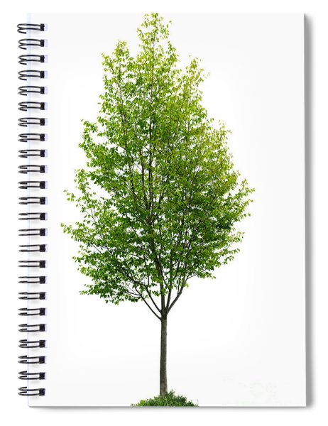 Isolated Young Tree Spiral Notebook