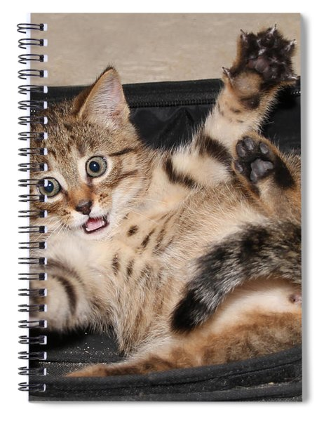 It Was This Big Spiral Notebook