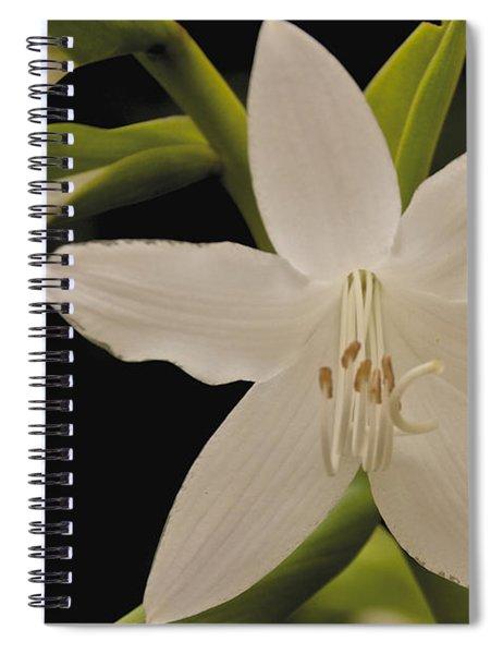 Its Summer Spiral Notebook