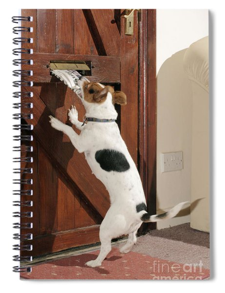 Jack Russell Terrier Gets Paper Spiral Notebook