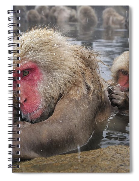 Japanese Macaque Grooming Mother Spiral Notebook