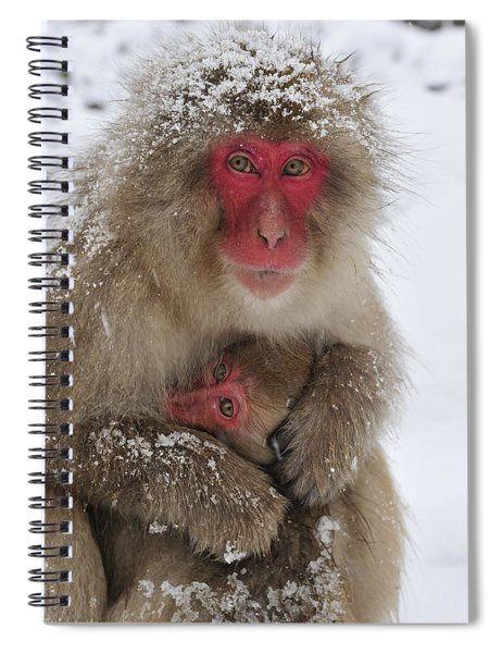 Japanese Macaque Warming Baby Spiral Notebook