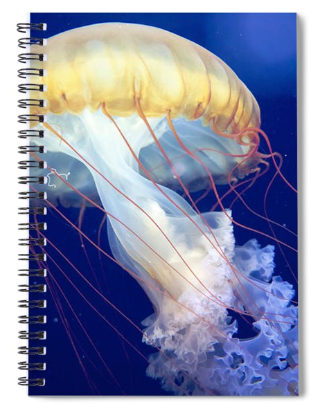 Japanese Sea Nettle Chrysaora Pacifica Spiral Notebook