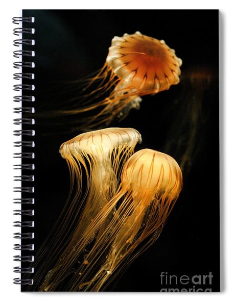 Jellyfish Trio Floating Against A Black Spiral Notebook