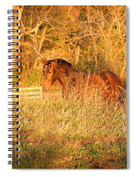 Jonathan Spiral Notebook