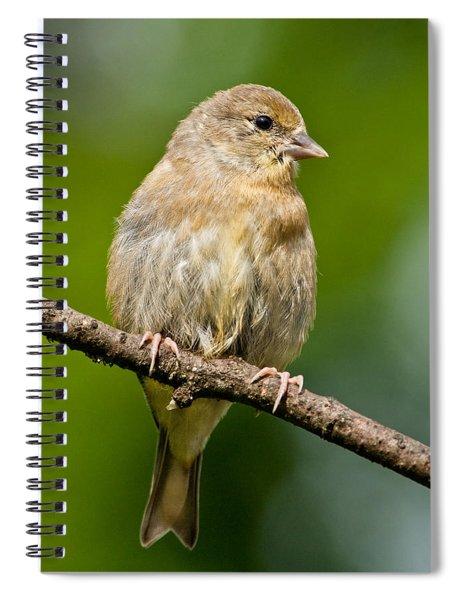 Juvenile American Goldfinch Spiral Notebook