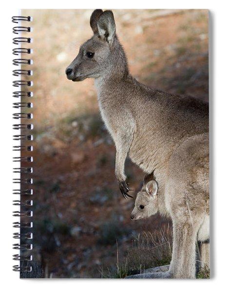 Kangaroo And Joey Spiral Notebook
