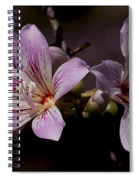 Kapok Bloom Spiral Notebook