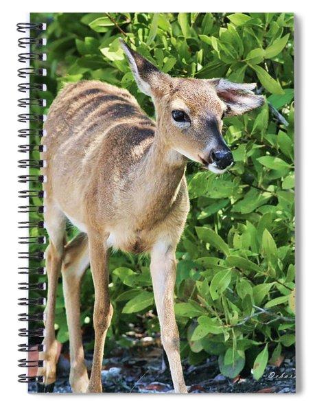 Key Deer Cuteness Spiral Notebook