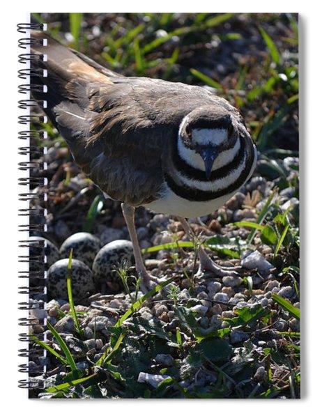Killdeer Guarding Her Eggs Spiral Notebook