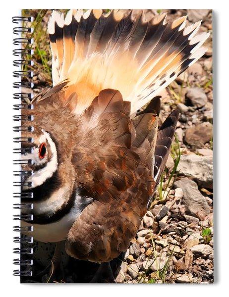 Killdeer On Its Nest Spiral Notebook