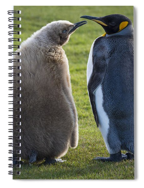 King Penguin With Chick, Begging Spiral Notebook