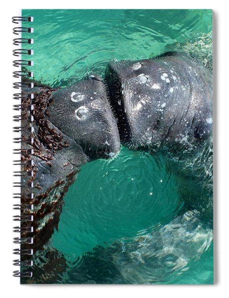 Kissing Manatees Near Harbour Island Spiral Notebook