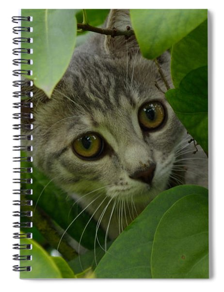 Kitten In The Bushes Spiral Notebook