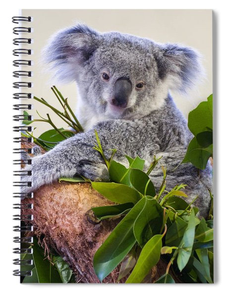 Koala On Top Of A Tree Spiral Notebook