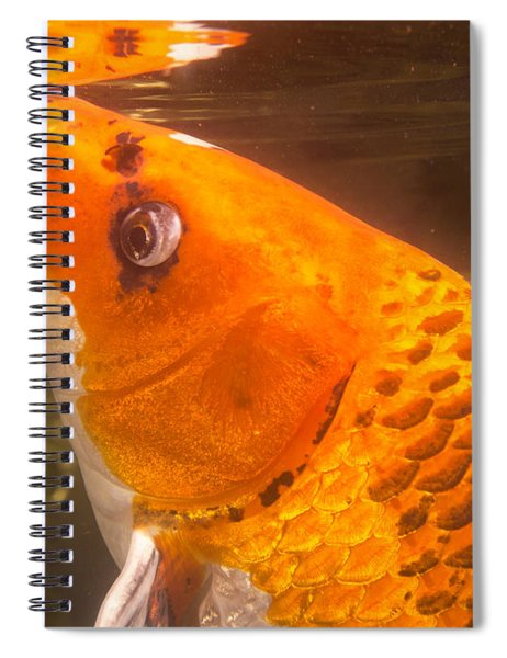 Koi Sipping At Surface Spiral Notebook