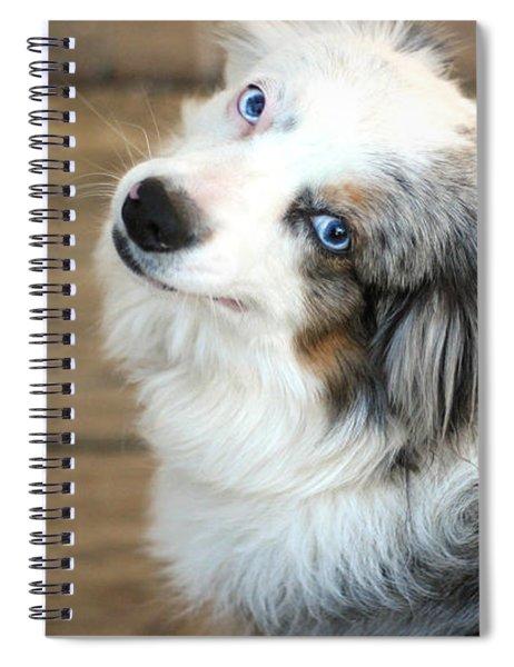 Kora The Australian Shepherd Spiral Notebook