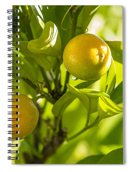 Kumquats Spiral Notebook
