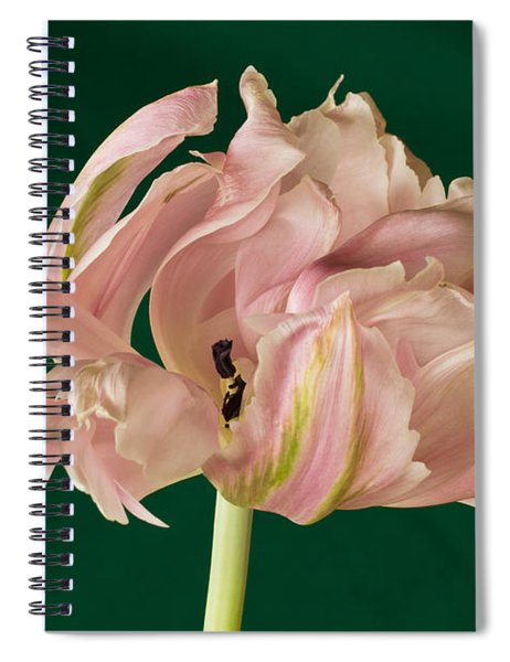 Lacey Tulip Spiral Notebook