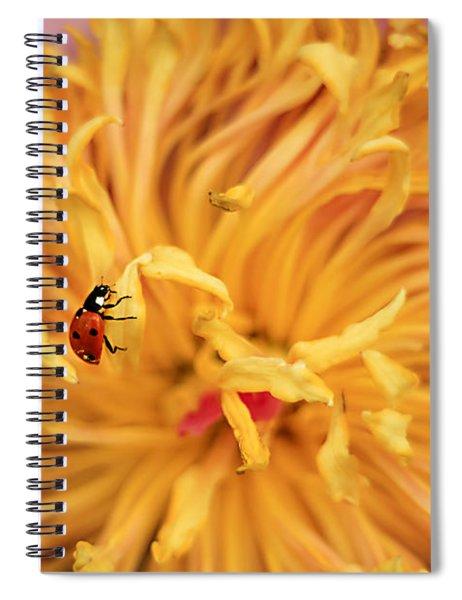Lady Bug Spiral Notebook