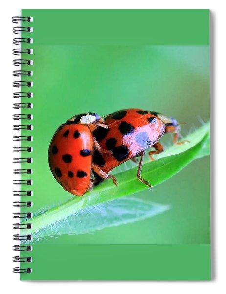 Ladybug And Gentlemanbug Spiral Notebook