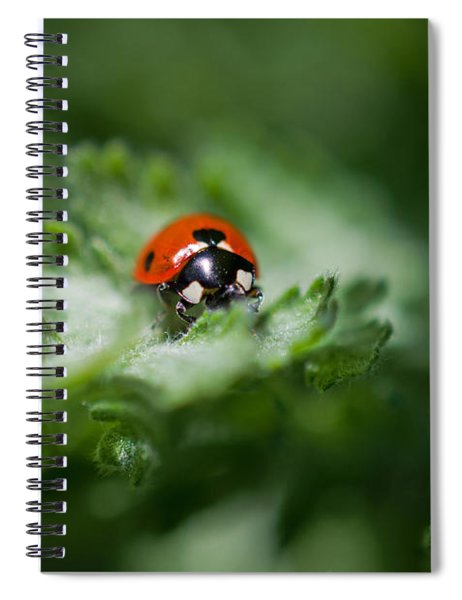 Ladybug On The Move Spiral Notebook
