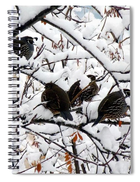 Lake Country Quail Spiral Notebook