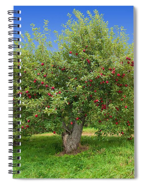 Large Apple Tree Spiral Notebook