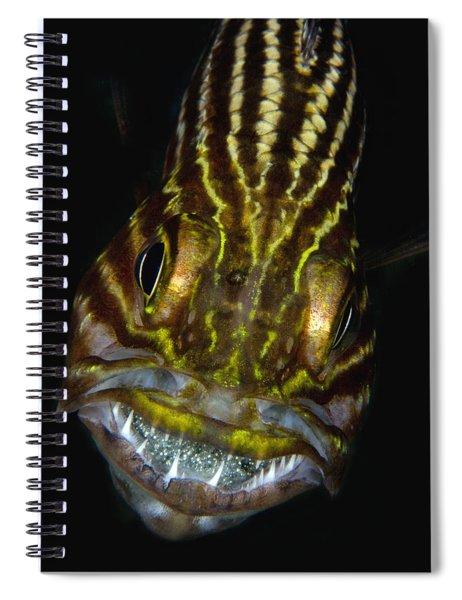 Large-toothed Cardinalfish Brooding Spiral Notebook