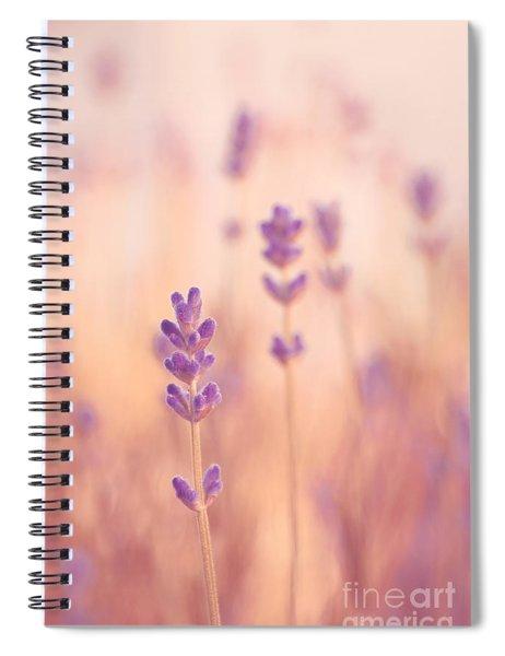 Lavandines 02 - S09a Spiral Notebook