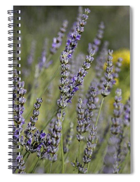Lavender 1 Spiral Notebook