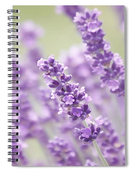 Lavender Dreams Spiral Notebook