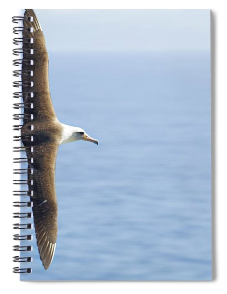 Laysan Albatross No 1 - Kilauea - Kauai - Hawaii Spiral Notebook