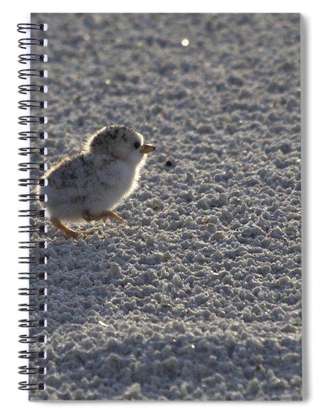 Least Tern Chick Spiral Notebook