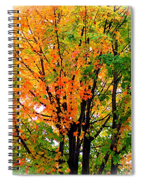 Leaves Changing Colors Spiral Notebook
