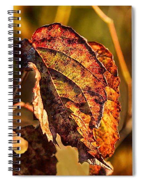 Leaving Autumn Spiral Notebook