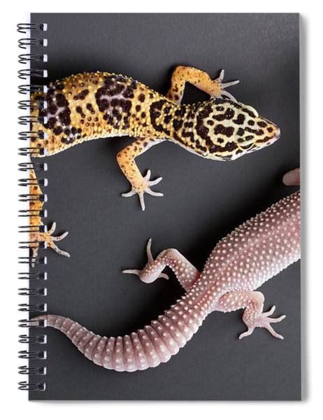 Leopard Gecko E. Macularius Collection Spiral Notebook