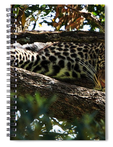 Leopard In A Tree Spiral Notebook