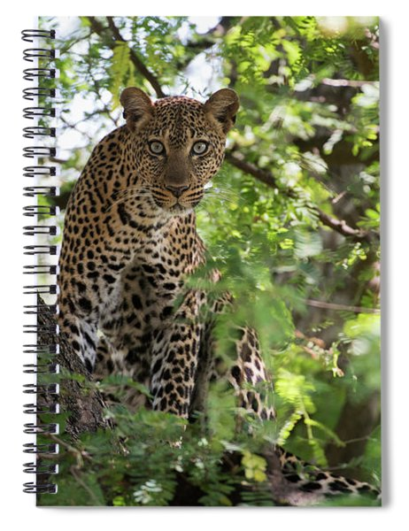 Leopard Staring From Tree In Lake Spiral Notebook