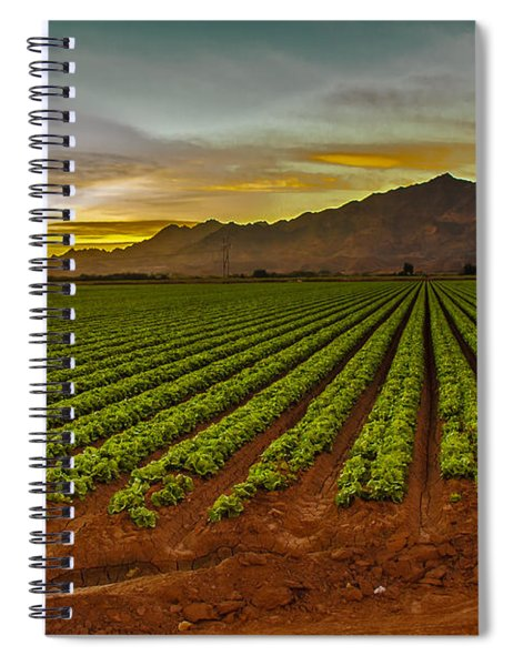 Lettuce Sunrise Spiral Notebook