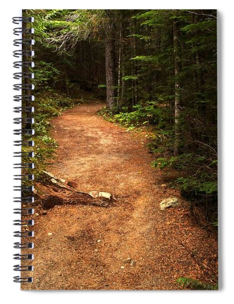 Light Through The Forest Canopy Spiral Notebook